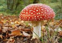 Lagonegro, durante un controllo Polstrada confisca 200 kg di funghi