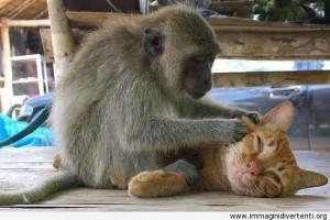 un-po-di-massaggio-il-gatto-si-sente-molto-bene