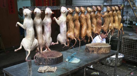 Des chiens sont proposés à la vente, quelques semaines avant un festival culinaire contesté à Yulin (Chine), le 19 mai 2014.