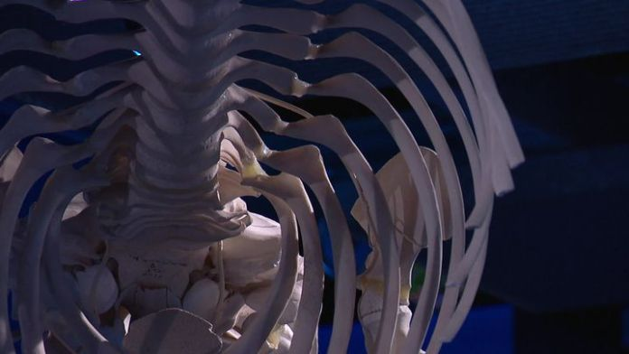 Whale skeleton  (France Televisions / France 3 La Rochelle)