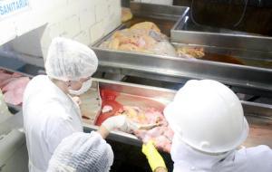 Técnicos da Prefeitura inspecionam todos os animais abatidos em Beltrão em busca de indícios de doenças e lesões