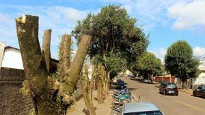Podas irregulares podem render multa de mais de R$ 2 mil e representam risco para as árvores e pessoas