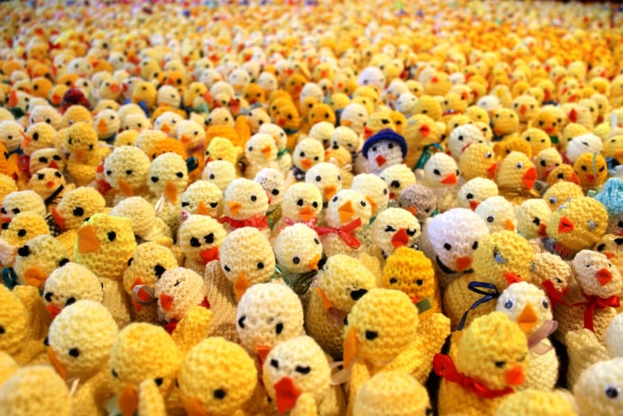 Crafters Respond to Plea for Knitted Chicks - Francis House