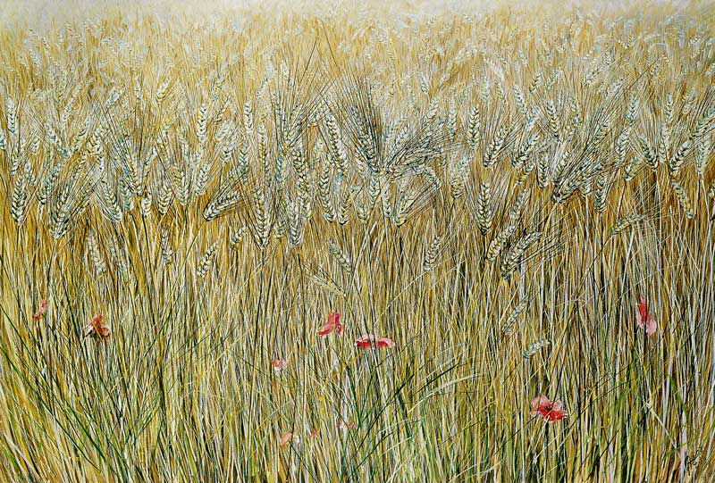 Campo di grano - olio su tela cm 90x60 anno 1989
