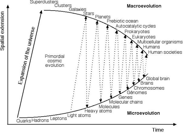 macro-micro evolution