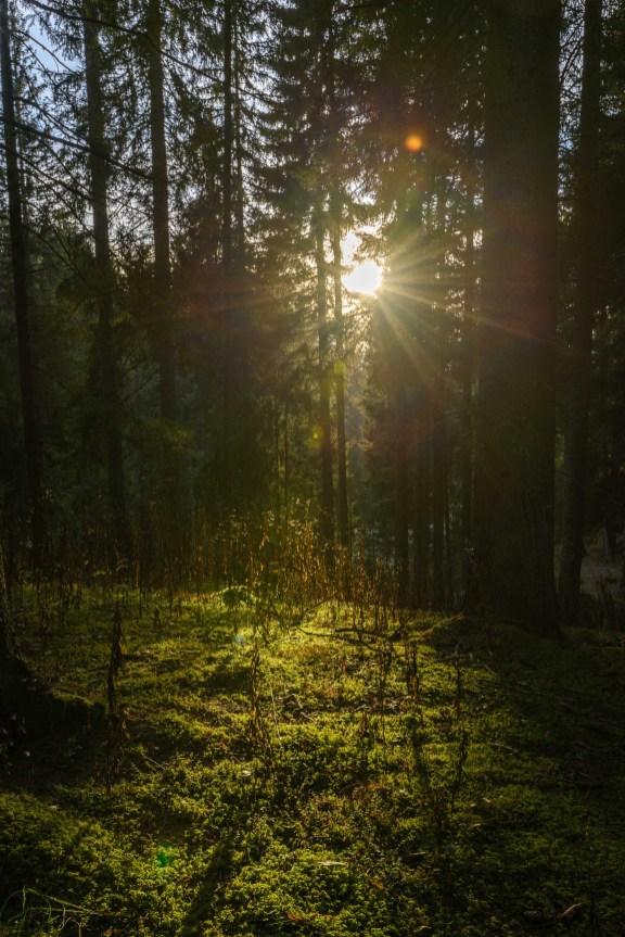 Lumières d'automne dans un sous-bois des Aravis.