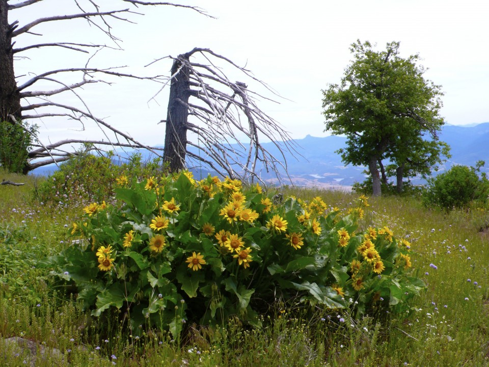 More wild flowers and the remnants of the 2002 forest fire.
