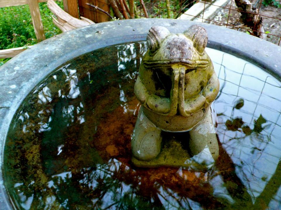 Freshly filled birdbath