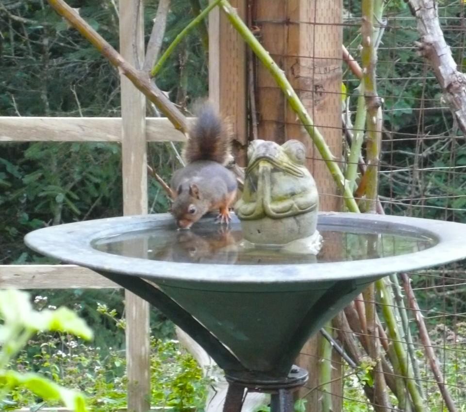 Birdbath, Namaste Frog, and Thirsty Mamma Squirrel.
