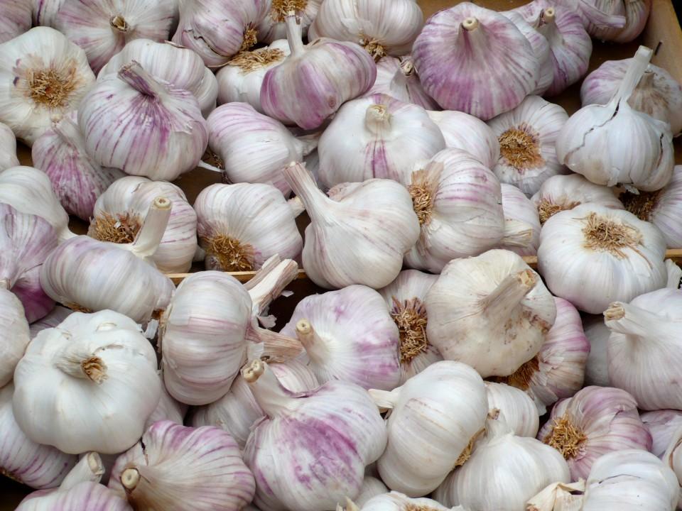 Sicilian garlic!
