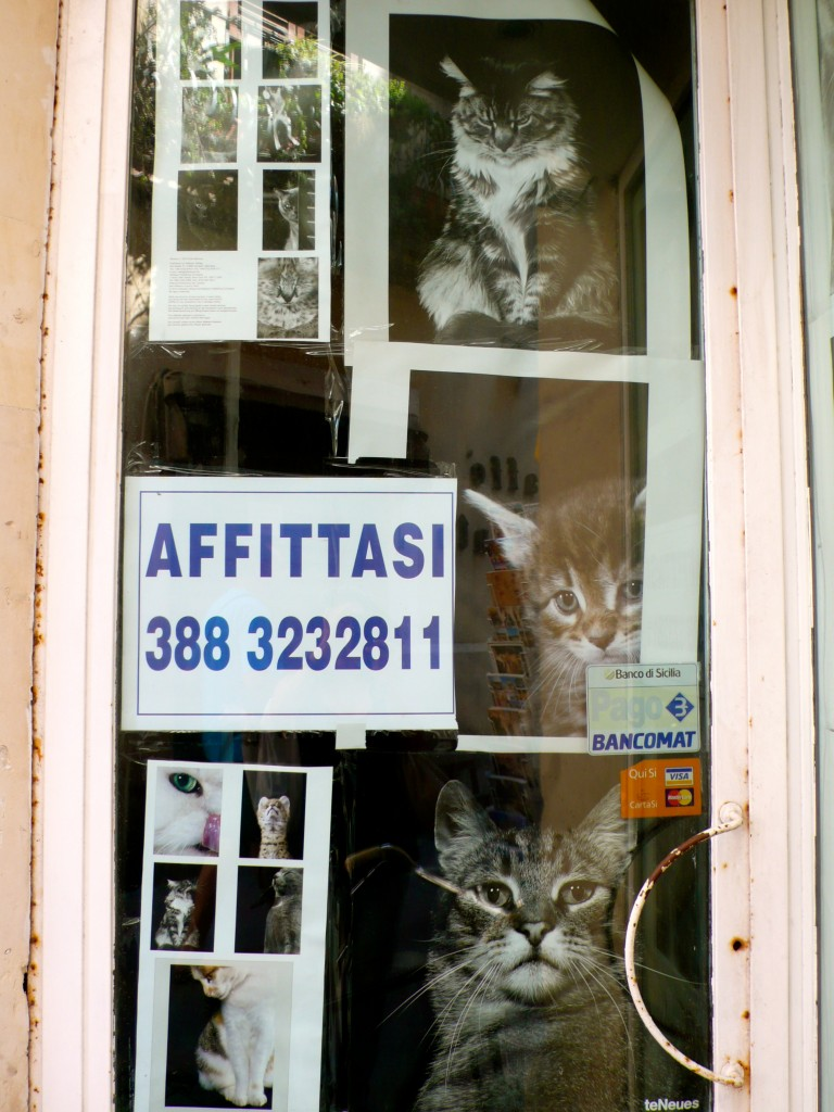 A sign advertising a store available for rent...and posters of cat on the door..