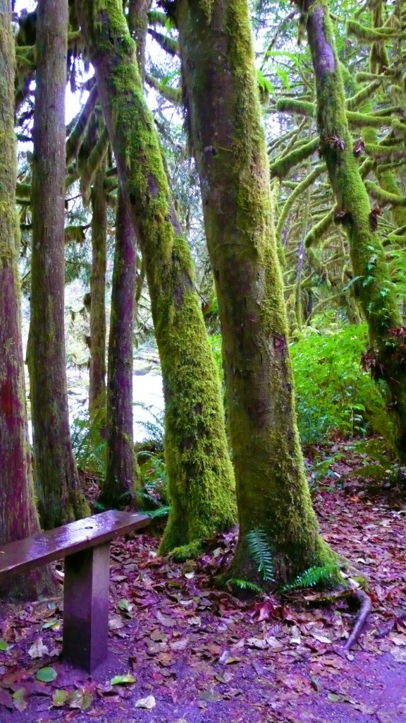 The forest at Wallace Falls