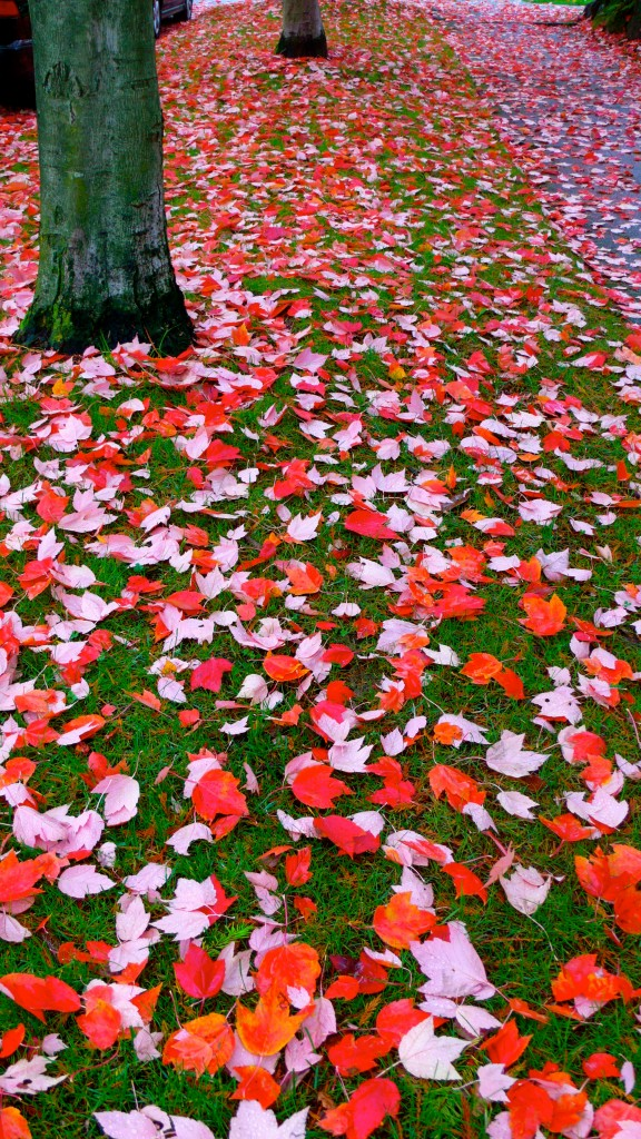 Gorgeous carpet of leaves!