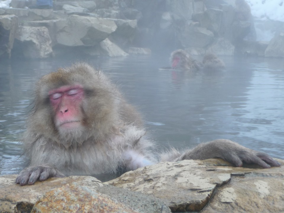 Monkey soaking away knee tensions at a natural hot spring