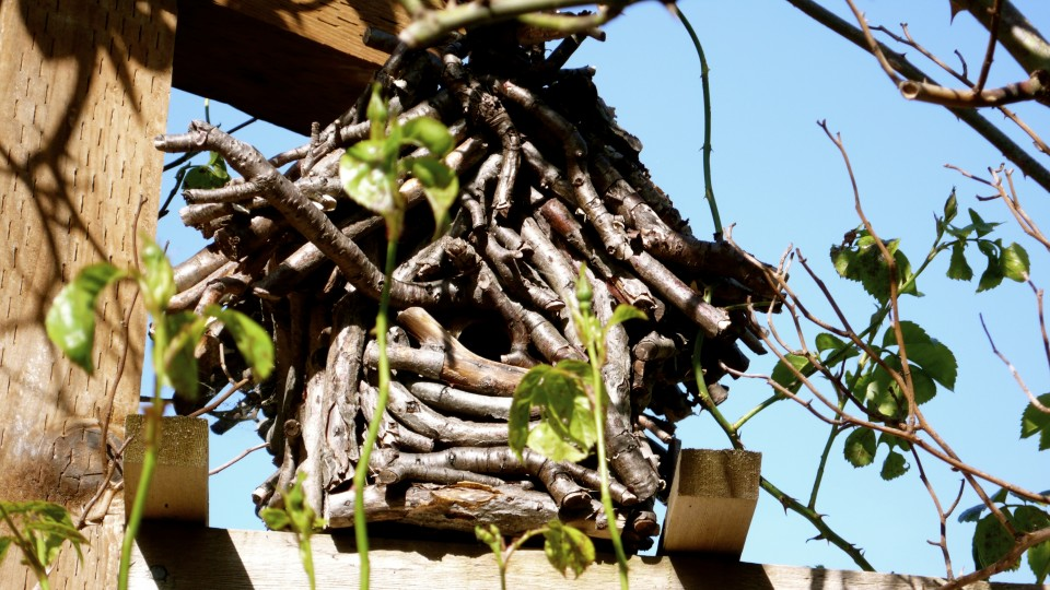 This birdhouse has housed many many bird families, one every year!