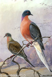 Passenger pigeons, were literally shot out of existence.
