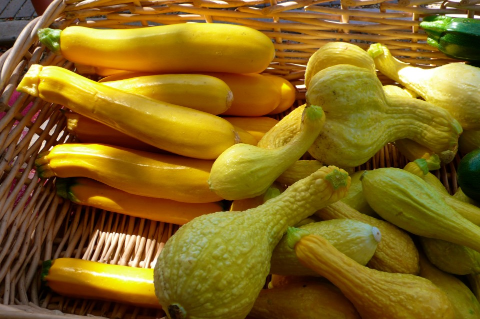 Squash and Yellow Zucchini