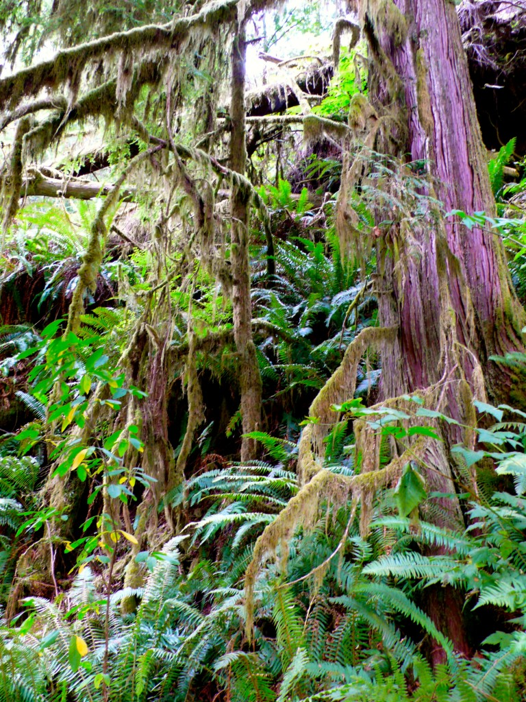 Dense mossy forest of Kiln Trail