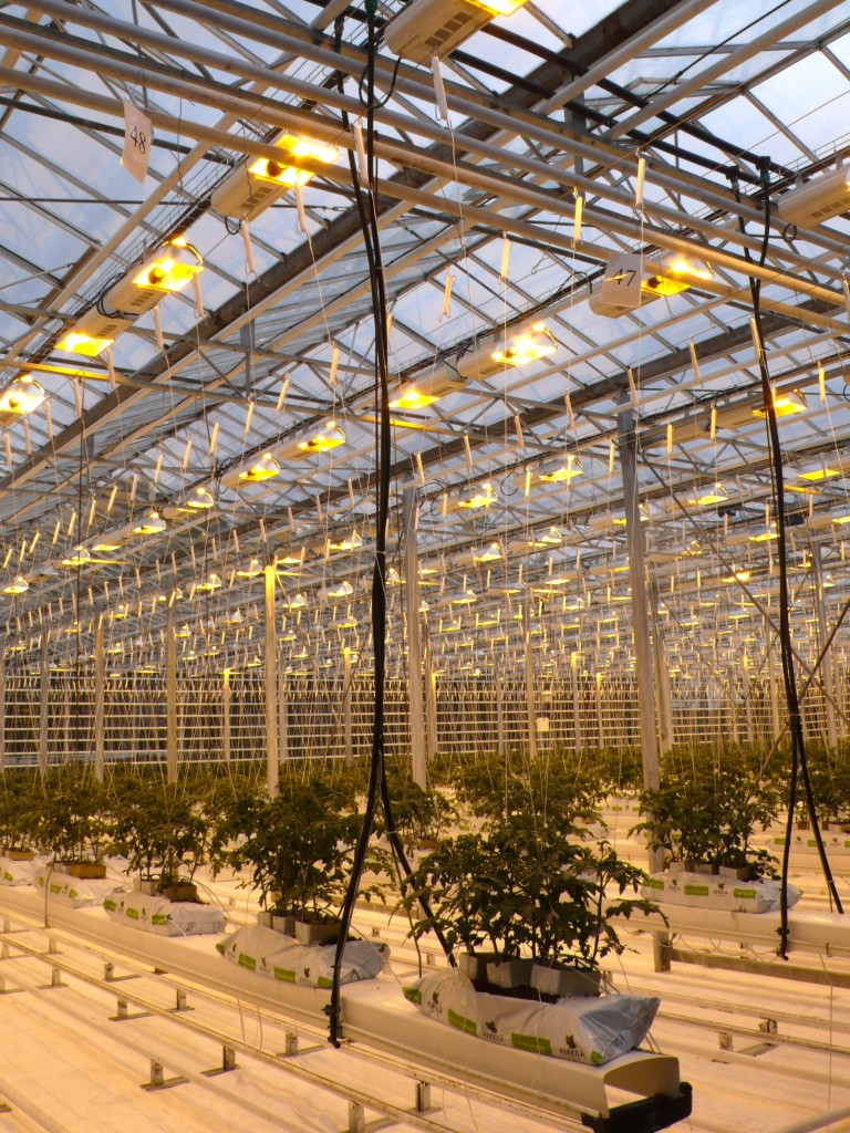 Greenhouses are bio sustainable and make use of 17 hours of sunlight from geothermal energy-run lights