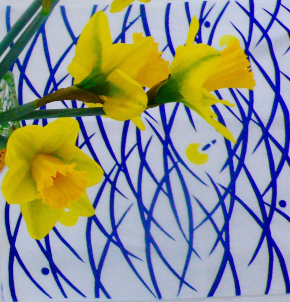Daffodils for Daphne