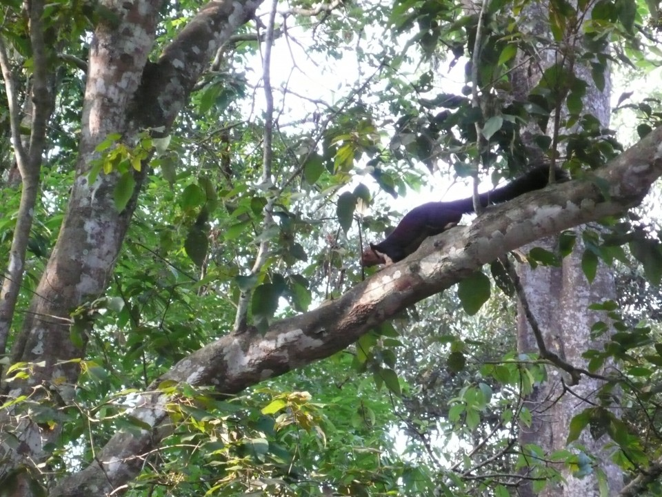 This is my photo of the Giant Squirrel