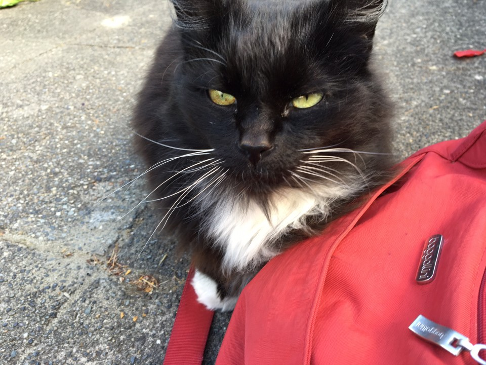 Georgia, too, liked my red bag!