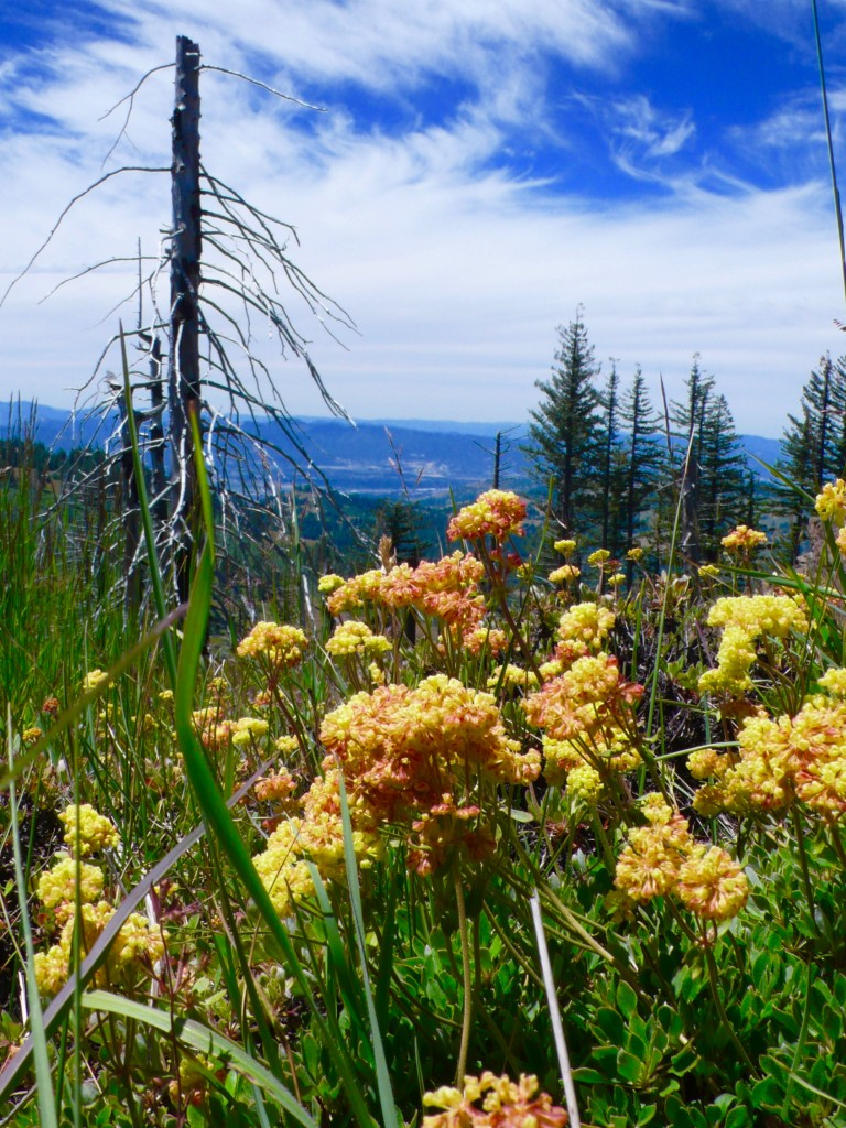 remnants from a forest fire and area in bloom