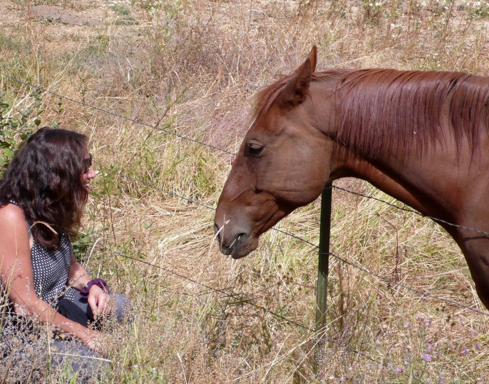 Got my horse fix today in Roslyn