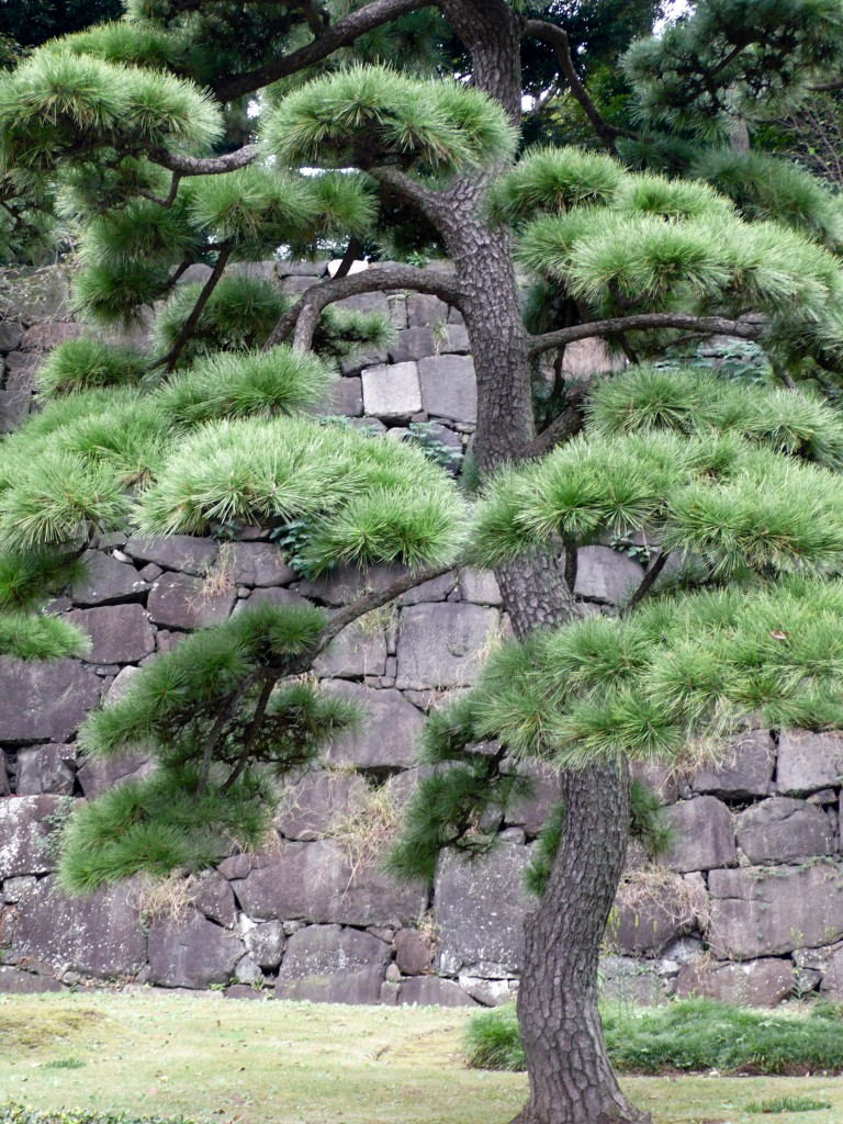 Pine Tree and Palace walls
