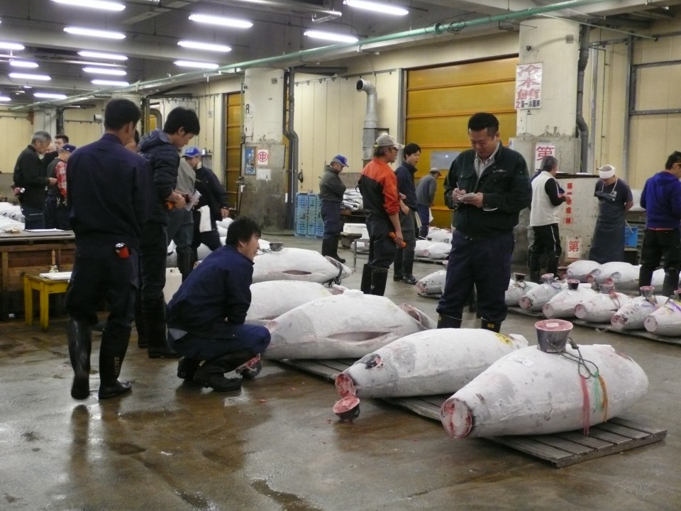 Each tuna sells for $100,000 or more. A 250 kg blue fin tuna can sell for over one million dollars