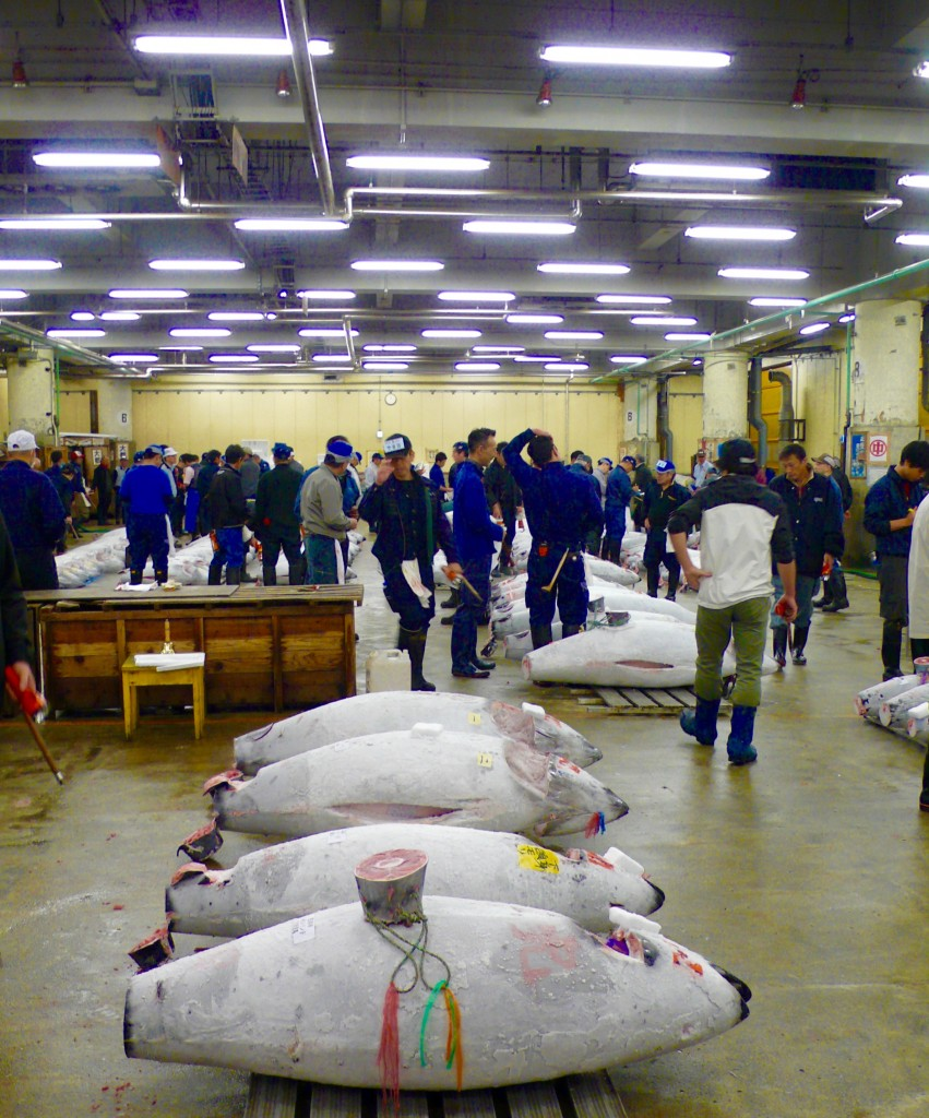 Crazily waiting for the auction to begin. In 20-25 minutes it will be done. Buyers will use their hook to haul away these huge fish. Within minutes, the frozen fish will be cut with a saw and sold to various restaurants. We could see the process taking place as we were exiting the auction hall.