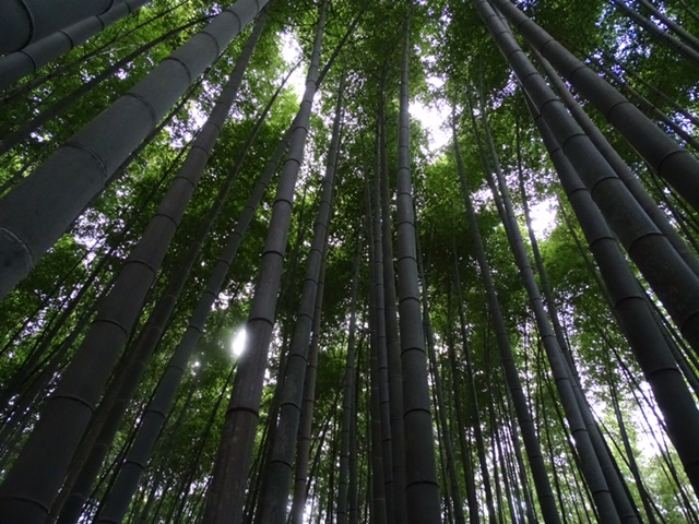 Jeff's photo of the bamboo forest