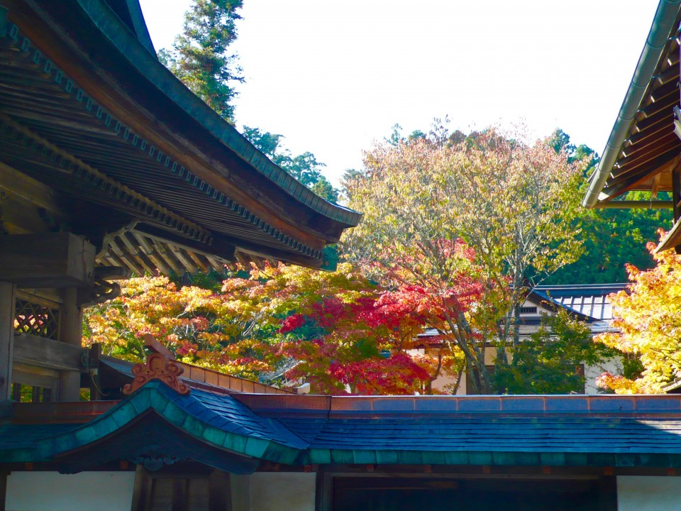 Autumn Leaves and Rooftops