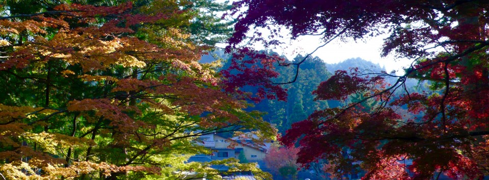 Panorama of Fall Leaves Mt Koya