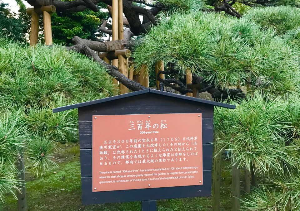 Here's another angle, and a sign that tells about it being planted 300 years ago. Perhaps the Shogun who had it planted stood here many years later, at the end of Autumn, and reflected on this haiku...