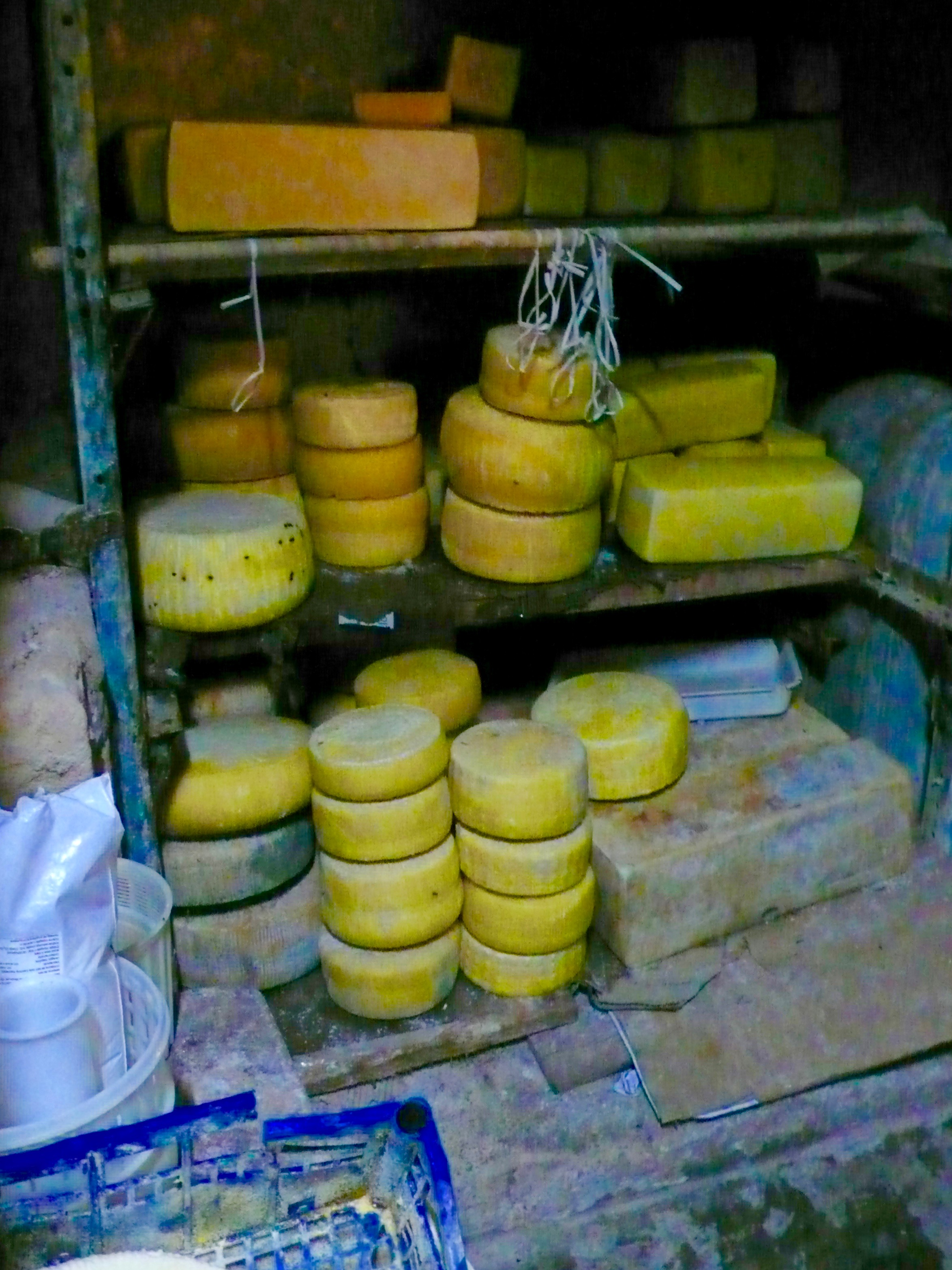 Maria makes all this cheese and it is later sold at local grocery stores to to private clients who come to the house.