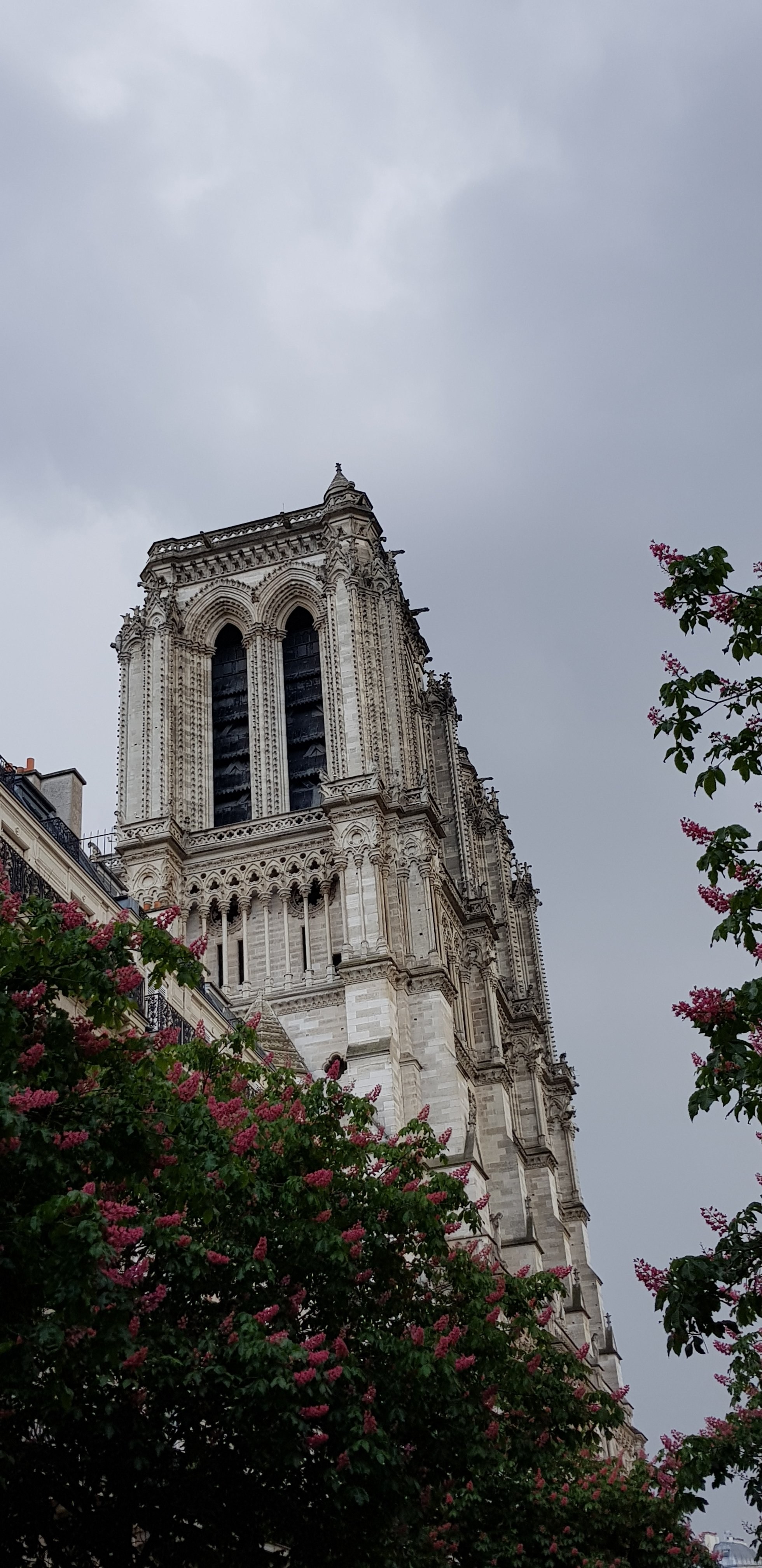 Notre Dame from the side after the fire to the roof