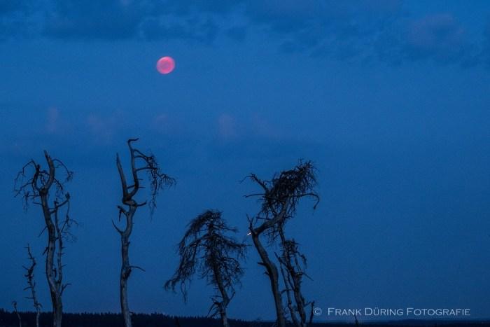 Blutmond, Hohes Venn, Nachtaufnahme, Milchstraße