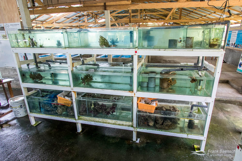 Broodstock tanks at the LINI (Indonesian Nature Foundation) Aquaculture Training Center.