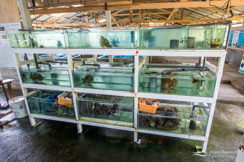 Broodstock tanks at the LINI (Indonesian Nature Foundation) Aquaculture Training Center.