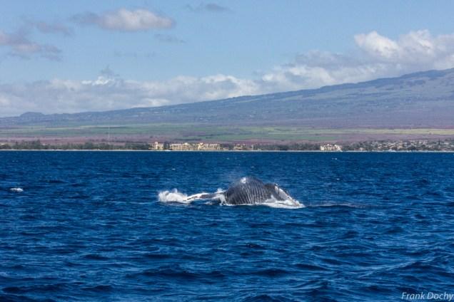 Maui-025