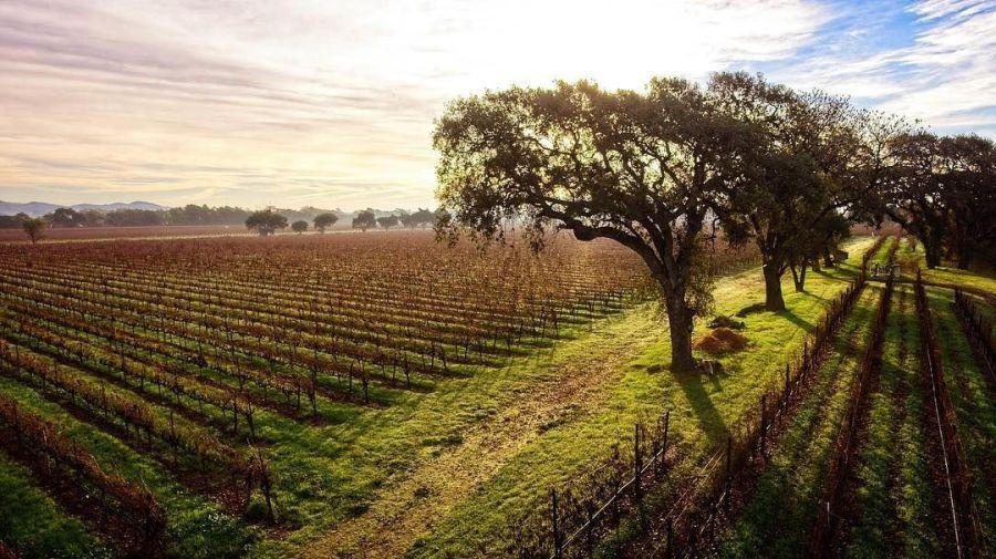wine, winery,vineyard,california wine,