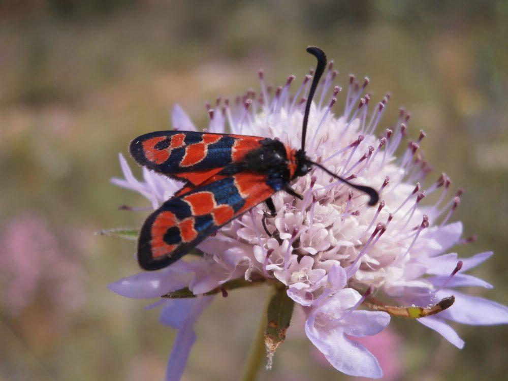 Aktionswoche zur Biologischen Vielfalt in Frankfurt
