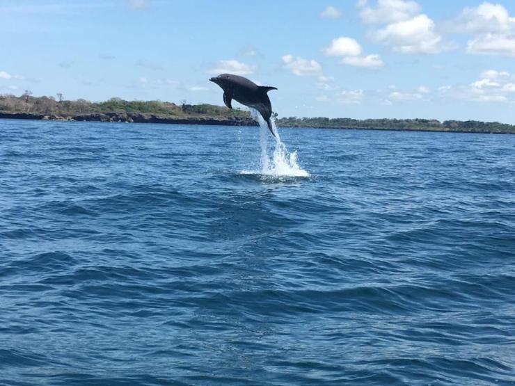 dolphin kisite wasini