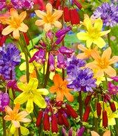Blumenzwiebel-Mix ´Kleine Kostbarkeiten´,25 Zwiebeln