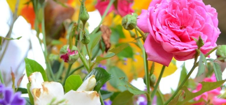 Rosen - Rosa - frankskleinergarten