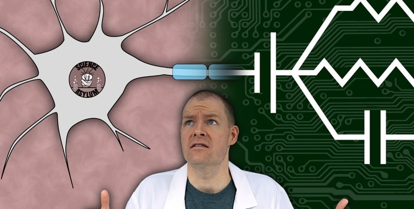 Are Neurons Just Electric Circuits?