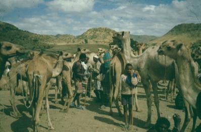 kamelenmarkt.jpg