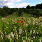 Monocrops and native plants in adjacent plots