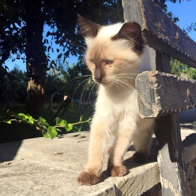 Cat at the Ta Mena Estate, Gozo.